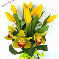 Wiązka Tulipanów