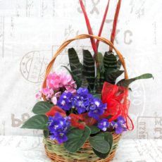 Kwitnący Ogródek
