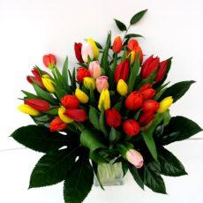 Bukiet 35 Tulipanów