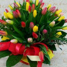 Bukiet 40 kolorowych tulipanów